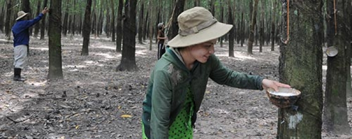 Forestland Conversion to Rubber Plantation in VietNam